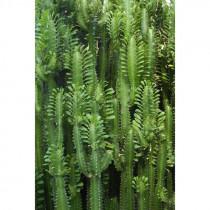 158830 Greenhouse Rasch-Textil Vliestapete