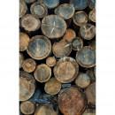 158206 Greenhouse Rasch-Textil
