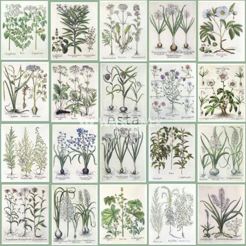 158826 Greenhouse Rasch-Textil