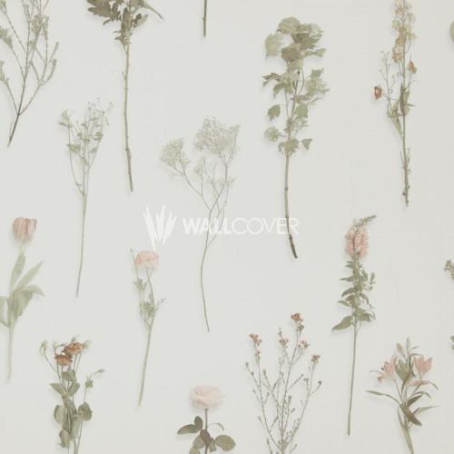 218243 Sweet Dreams BN Wallcoverings