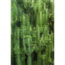 158830 Greenhouse Rasch-Textil