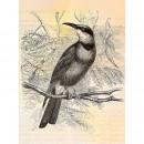 DD110436 Walls by Patel Vintage Birds